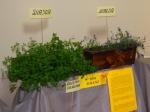 """Konkurs Ekologiczny pt. """"Polskie kwiaty i zioła"""" - miniatura"""