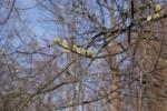 Pierwsze tchnienia wiosny - miniatura