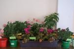 Mój Przyjaciel Kwiatek - miniatura