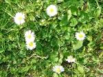 Wiosna - miniatura