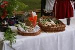Festiwal Amoniaczków - miniatura